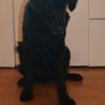 Alfie turns 9 1 Alfie turns 9
