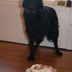 Alfie turns 9 2 Alfie turns 9
