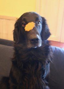 Biscuit challenge 1 Biscuit challenge