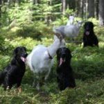 pets - lemmikkiblogi