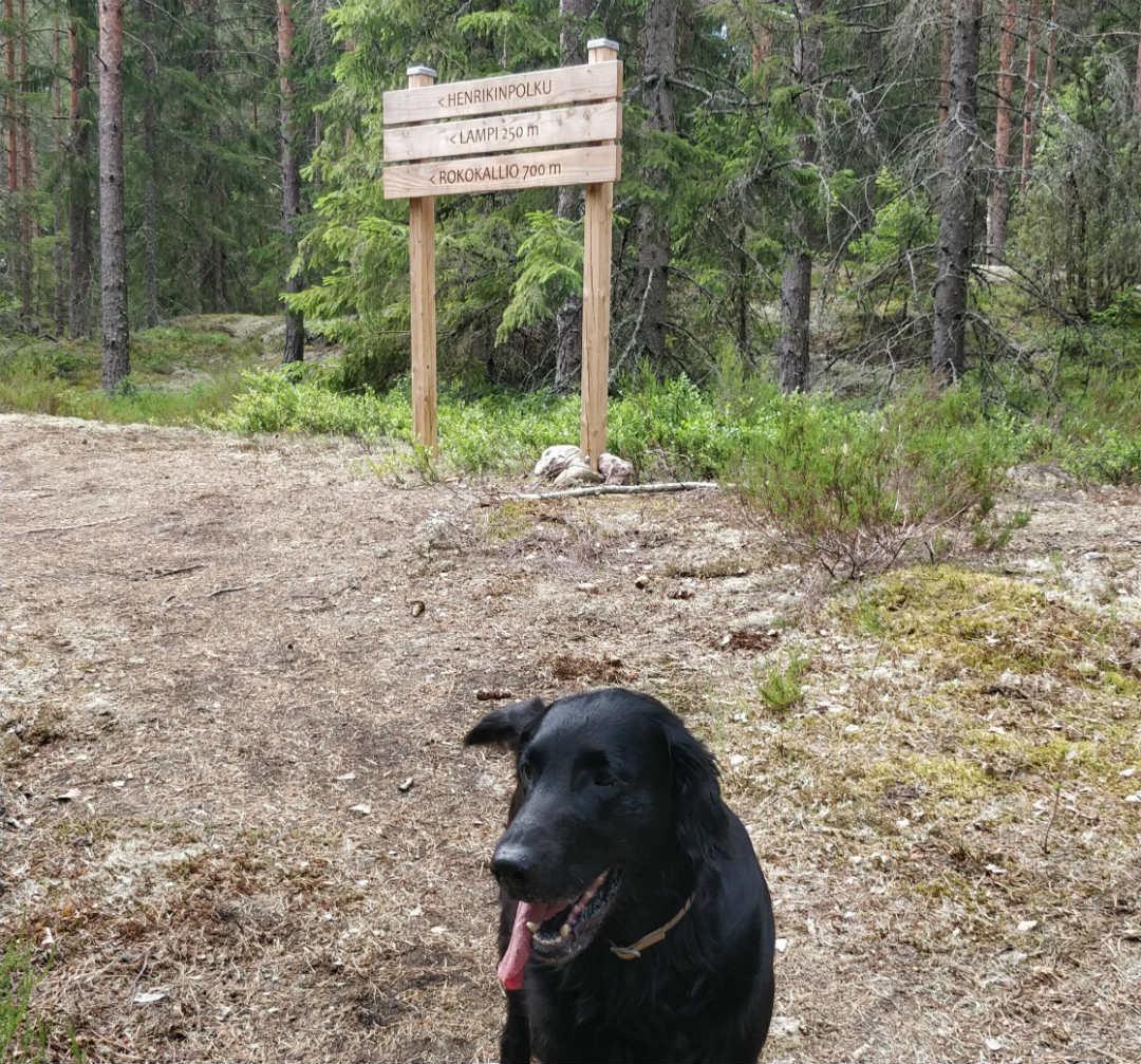 Minnie iloisena metsässä