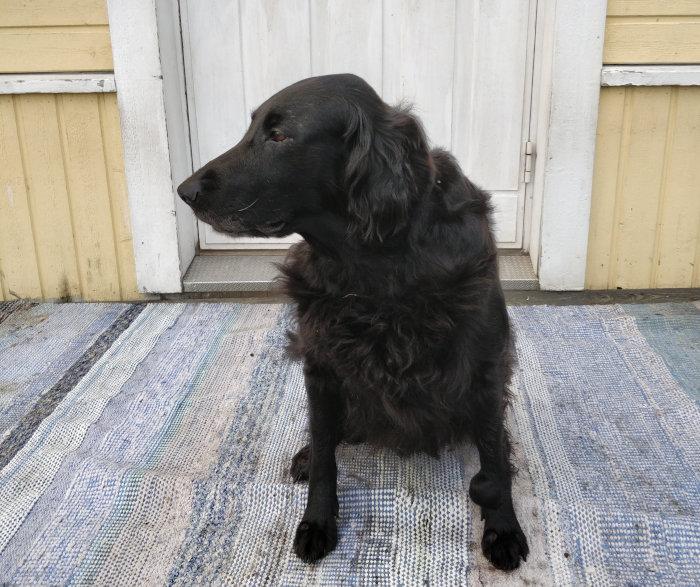 Minnie 11 vuotta