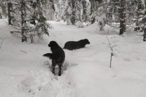 Lumi hangessa