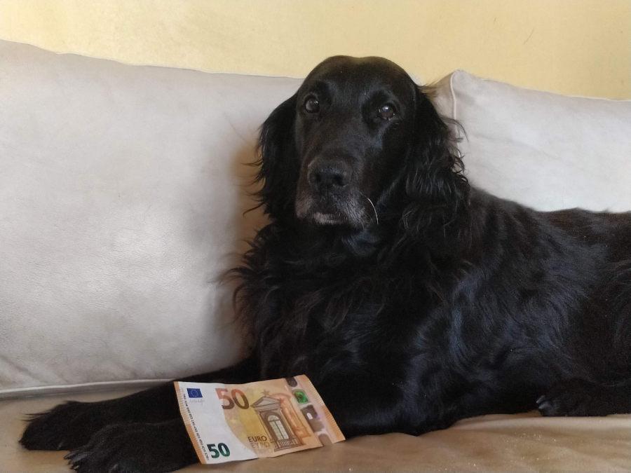 Tuleeko koiravero takaisin?