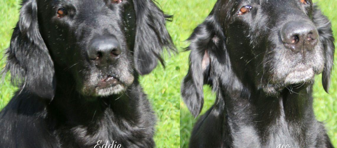 Eddie-Alfie