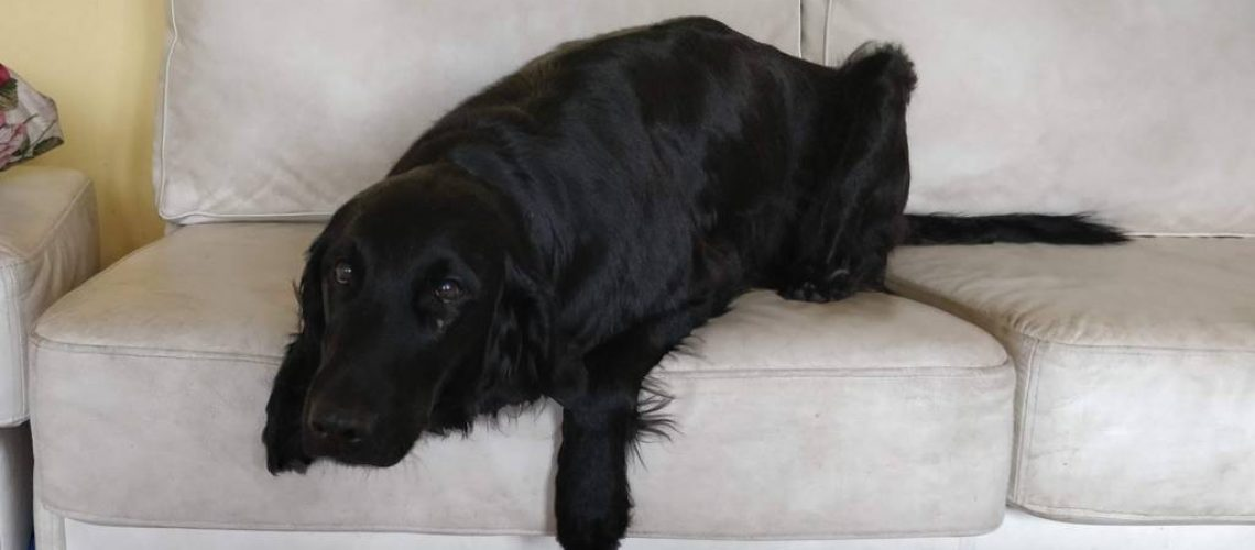 Hanie sohvalla - poseeraus ei hänelle se juttu