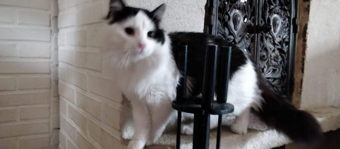 Manu, the cat