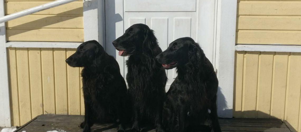 Minnie, Eddie, Hanie