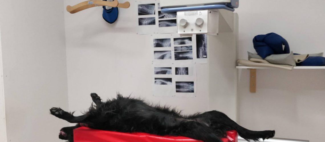 Pevisa - Hanie röntgenissä